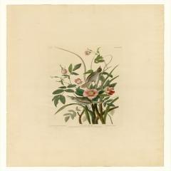 约翰·詹姆斯·奥杜邦《美洲鸟类》(3)John James Audubon