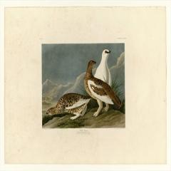 约翰·詹姆斯·奥杜邦《美洲鸟类》(2)John James Audubon