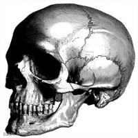 人体解剖学参考学习图片(6)