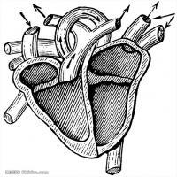 人体解剖学参考学习图片(3)