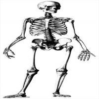 人体解剖学参考学习图片(1)
