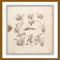 花卉植物(2)世界素描高清图片花卉植物素描高清图片