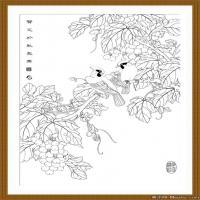 工笔线稿(2)当代画家工笔线稿线描高清图片