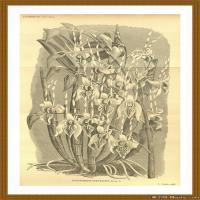 花卉植物(1)世界素描高清图片花卉植物素描高清图片
