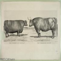 动物素描(6)高清晰高档图片素材专业下载