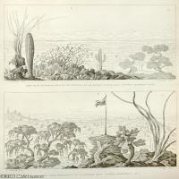 (1)花卉植物素描高档喷绘印刷欧美图片资源文件
