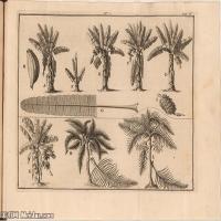 (3)花卉植物素描高档喷绘印刷欧美图片资源文件