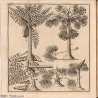 (2)花卉植物素描高档喷绘印刷欧美图片资源文件