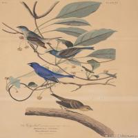 插画鸟类(33)动物飞鸟类图片插画飞鸟图片