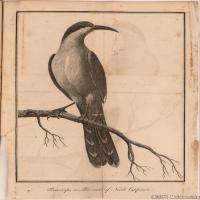 插画鸟类(44)动物飞鸟类图片插画飞鸟图片