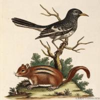插画鸟类(20)动物飞鸟类图片插画飞鸟图片