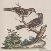 插画鸟类(16)动物飞鸟类图片插画飞鸟图片