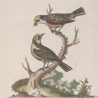 插画鸟类(17)动物飞鸟类图片插画飞鸟图片