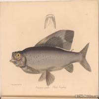 插画水族(4)动物鱼类海洋生物插画图案