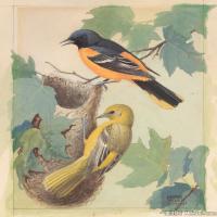 插画鸟类(39)动物飞鸟类图片插画飞鸟图片