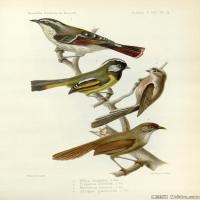 插画鸟类(43)动物飞鸟类图片插画飞鸟图片