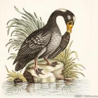 插画鸟类(19)动物飞鸟类图片插画飞鸟图片