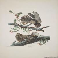 插画鸟类(2)动物飞鸟类图片插画飞鸟图片