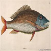 插画水族(1)动物鱼类海洋生物插画图案