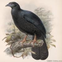 插画鸟类(30)动物飞鸟类图片插画飞鸟图片