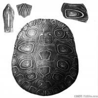 插画水族(6)动物鱼类海洋生物插画图案