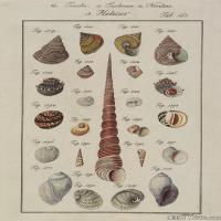 插画水族(2)海螺贝壳插画图案