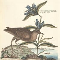 插画鸟类(22)动物飞鸟类图片插画飞鸟图片