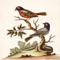 插画鸟类(18)动物飞鸟类图片插画飞鸟图片