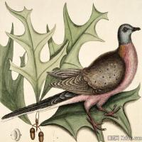 插画鸟类(38)动物飞鸟类图片插画飞鸟图片