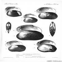 插画水族(4)海螺贝壳插画图案