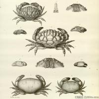 插画水族(9)动物鱼类海洋生物插画图案