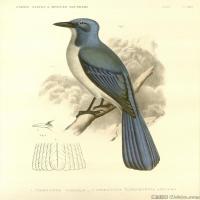 插画鸟类(42)动物飞鸟类图片插画飞鸟图片