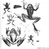 插画水族(5)动物鱼类海洋生物插画图案