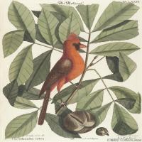 插画鸟类(28)动物飞鸟类图片插画飞鸟图片