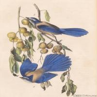 插画鸟类(32)动物飞鸟类图片插画飞鸟图片