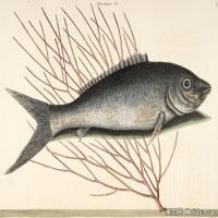 插画水族(11)动物鱼类海洋生物插画图案