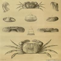 插画水族(2)动物鱼类海洋生物插画图案