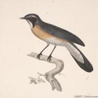 插画鸟类(35)动物飞鸟类图片插画飞鸟图片