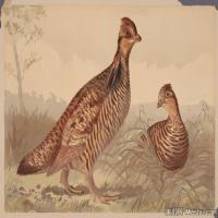 插画鸟类(45)动物飞鸟类图片插画飞鸟图片