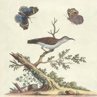 插画鸟类(27)动物飞鸟类图片插画飞鸟图片