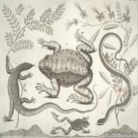 插画水族(8)动物鱼类海洋生物插画图案