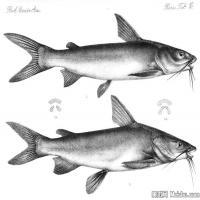 插画水族(7)动物鱼类海洋生物插画图案