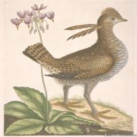 插画鸟类(40)动物飞鸟类图片插画飞鸟图片