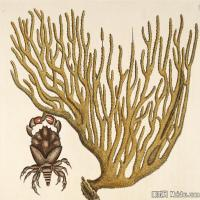 插画水族(10)动物鱼类海洋生物插画图案