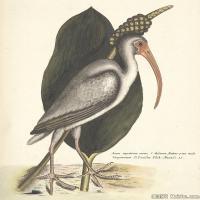 插画鸟类(23)动物飞鸟类图片插画飞鸟图片
