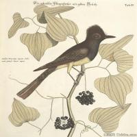 插画鸟类(25)动物飞鸟类图片插画飞鸟图片