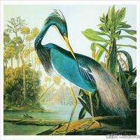 插画鸟类(41)动物飞鸟类图片插画飞鸟图片