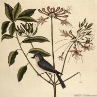 插画鸟类(37)动物飞鸟类图片插画飞鸟图片