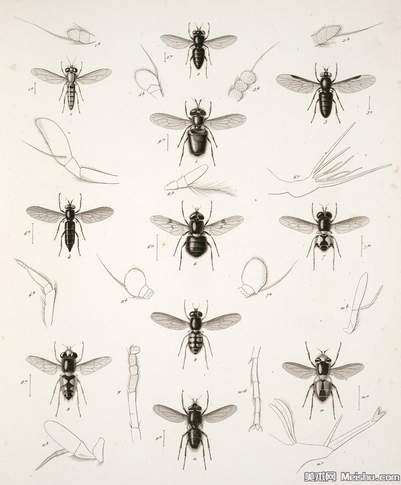 动物昆虫(7)插画动物昆虫图片昆虫插画图案