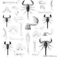 动物昆虫(6)插画动物昆虫图片昆虫插画图案